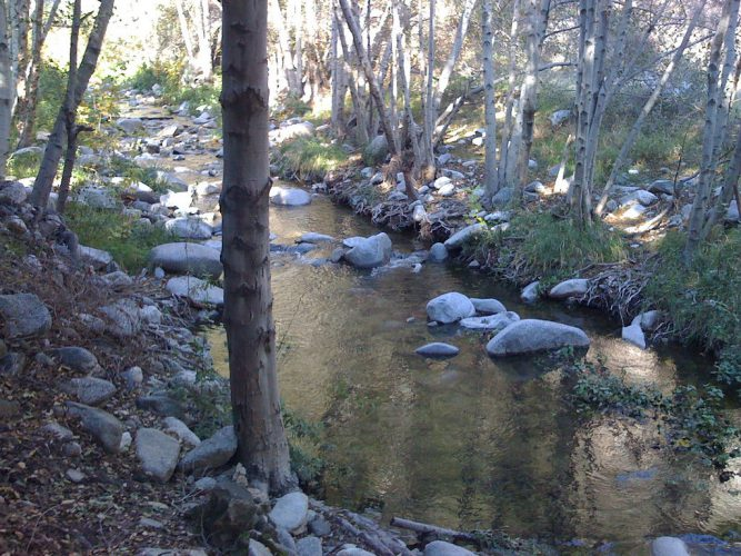 Image of stream with rocks and trees, taken in Pasadena