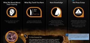 gorgosaurus facts 2