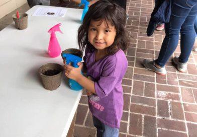Planting Seeds ~ Preschool STEAM