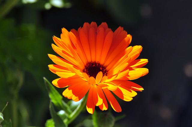 Photograph of a flower.