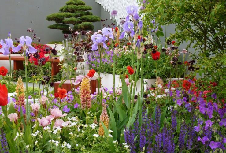 Chelsea Flower Show photo