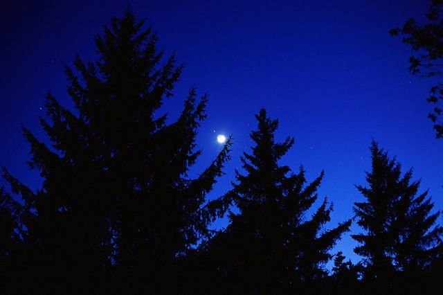 image-moon-forest